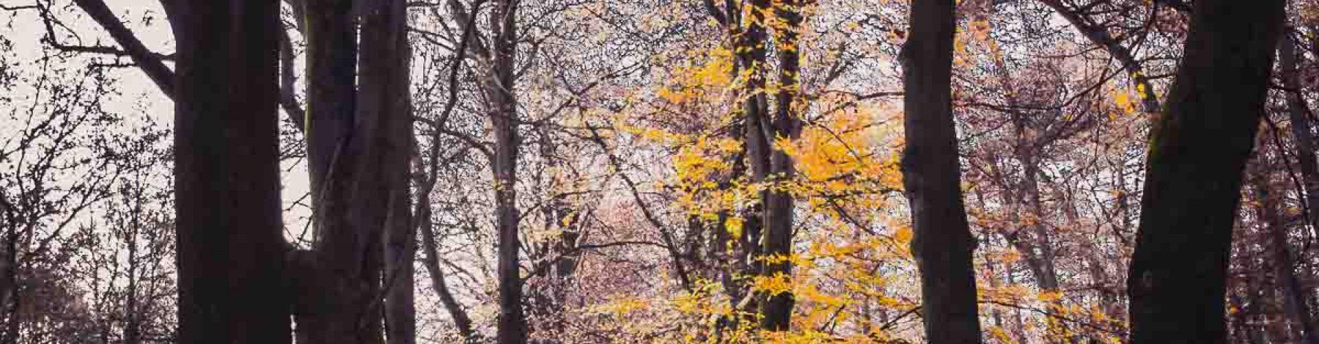 Kaatsheuvel, herfst