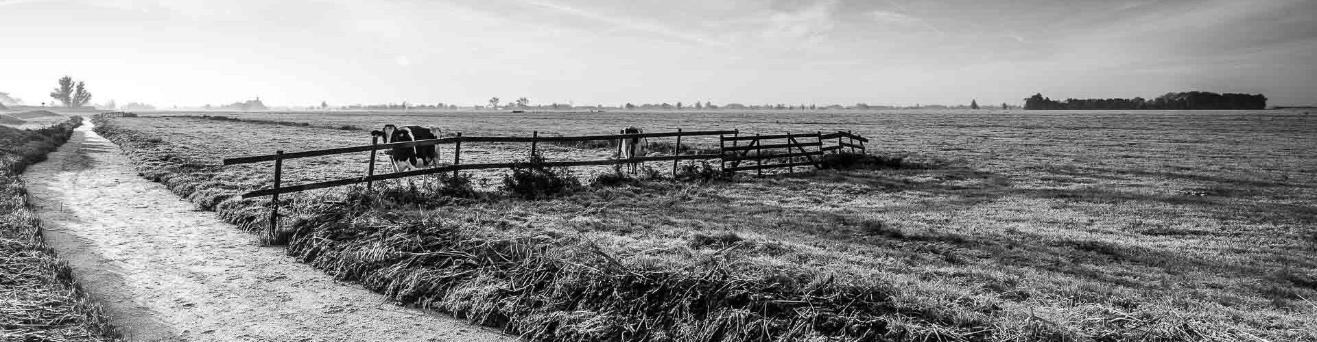 Polder Hollandse winter